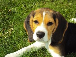 Wie ist ein artgerechtes Hundefutter zusammengesetzt?