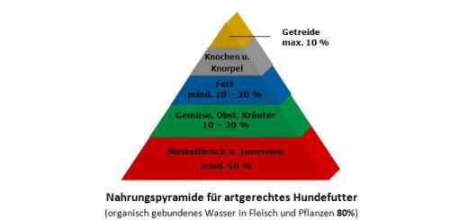 Nahrungspyramide für artgerechtes Hundefutter