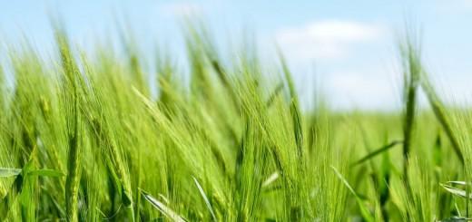 Inforeihe: Kohlenhydrate