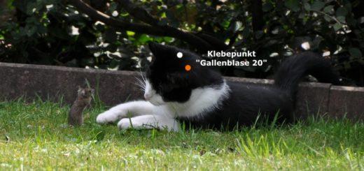 Akupunkturpflaster für Hunde und Katzen