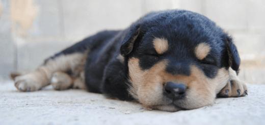 Ernährung eines Hundewelpen – von der Geburt bis zum ausgewachsenen Hund